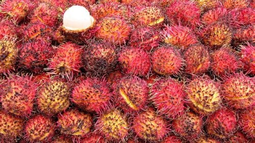 泰國 紅毛丹 產季